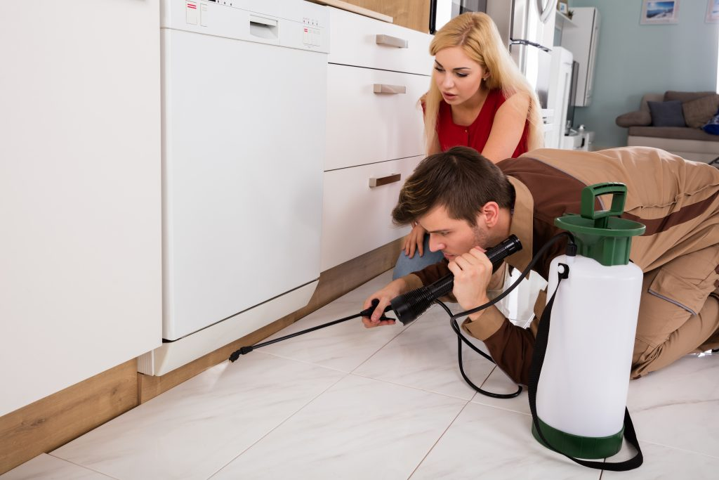 who is good at spider control west palm beach?